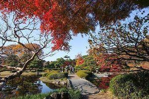Những không gian xanh ấn tượng trong lòng Tokyo