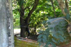 Đi chăn trâu, tá hỏa phát hiện thi thể treo trên cây đang phân hủy nặng