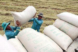 Tung vốn mua 20 vạn tấn gạo ở ĐBSCL: 'Neo' giá, chờ đơn hàng lớn