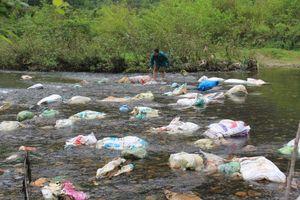 Thái Nguyên: Xác lợn chết trôi lềnh bềnh trên sông Dong