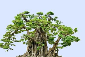 Hà Nội: Hội Sinh Vật Cảnh hưởng ứng Tết Trồng cây đời đời nhớ ơn Bác Hồ!