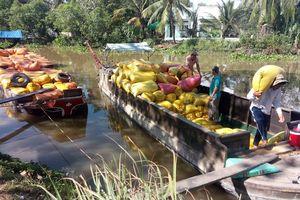 'Giải cứu' cấp tốc lúa gạo miền Tây: Rồi sao nữa?