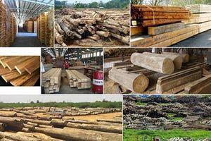 Thủ tướng tham dự Diễn đàn xuất khẩu gỗ, lâm sản
