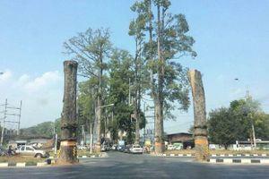 Chính quyền bị kiện vì đốn cây trăm tuổi