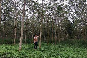 Lật tẩy đường dây hợp thức sổ đỏ đất rừng cho vợ chủ tịch huyện