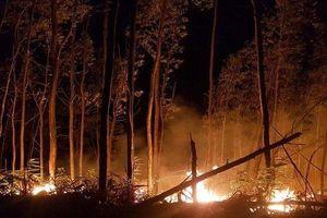 Huế: Gần 5 hecta rừng bị thiêu rụi