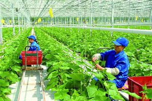 CPTPP có hiệu lực, kỳ vọng FDI vào nông nghiệp sẽ tăng