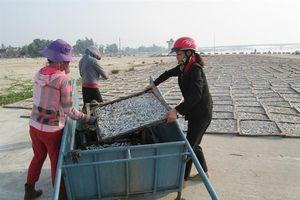 Phát triển nghề chế biến cá hấp phơi khô