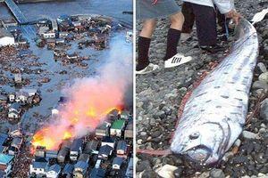 Bắt được loài cá 'tận thế', người Nhật nơm nớp sợ thảm họa này
