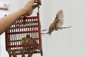 Chim phóng sinh bị cắt cánh: Phóng sinh hay phóng... tử?