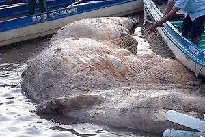 Phát hiện xác cá voi trên miền biển Cà Mau