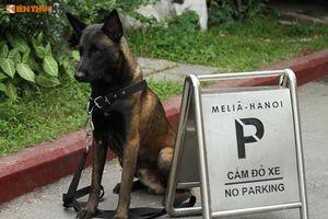 Ảnh 'hot' chó nghiệp vụ Việt, Mỹ chuẩn bị Hội nghị Mỹ - Triều