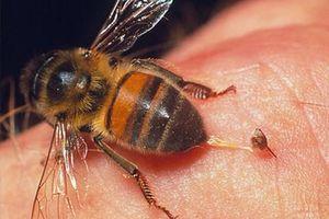 Bị ong đốt tử vong khi đi lấy mật