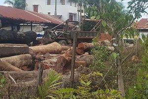 Một chiến sĩ công an tử vong khi trông coi gỗ lậu của trùm Phượng 'râu'