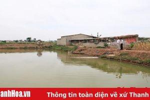 Chuyển đổi đất cói kém hiệu quả sang nuôi trồng thủy sản ở Nga Tân - bước đi đúng hướng