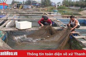 Nuôi cá lồng vượt quy hoạch trên khu vực biển Nghi Sơn