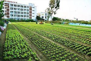 Biến đất trăm tỷ bỏ hoang thành vườn rau sạch