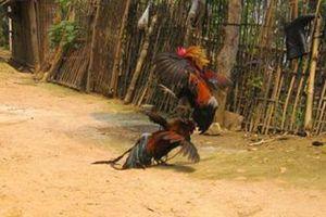 Độc đáo tục lệ cho thú rừng ăn Tết