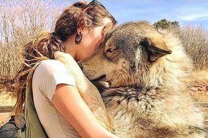 Sự thật ít ai biết đến về chó sói