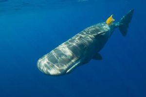 Nhựa gây ảnh hưởng đến vấn đề sinh sản của động vật hoang dã