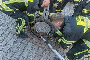 Hài hước: 'Điều động gấp' đội cứu hỏa để giải thoát chú chuột béo ú mắc kẹt