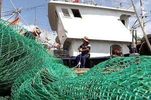 Nguồn cá toàn cầu lâm nguy