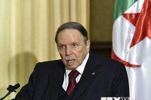 Tổng thống Algeria thay người phụ trách chiến dịch tranh cử