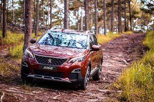 'Sư tử Pháp' Peugeot tìm đường về Mỹ