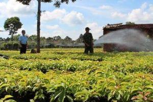 Ở thành phố nhưng nhiều nông dân giàu nhờ ươm cây giống
