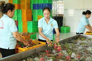 Tăng cường kiểm tra, kiểm soát chất lượng nông sản, thực phẩm