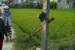 Hai vợ chồng thương vong vì kéo điện ra đồng diệt chuột