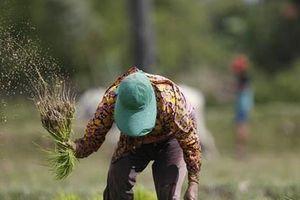 Thủ tướng Campuchia kêu gọi đa dạng hóa thị trường xuất khẩu gạo