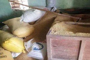 Thêm tiết lộ đặc biệt trong vụ 49 lượng vàng trong đống lúa 'bốc hơi'
