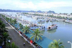 Trượt chân xuống nước tại cảng Tuần Châu du khách người Nhật tử vong