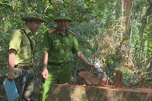 Giám đốc CA tỉnh Đắk Lắk chỉ đạo điều tra vụ phá rừng quy mô lớn