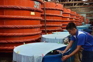 Dự thảo sản xuất nước mắm: 'Không đáp ứng được cũng không sao