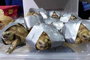 Phát hiện 1.500 con rùa lạ tại sân bay