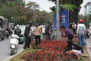 Dân mang cả ô tô 'hôi' hoa, lãnh đạo công ty cây xanh nói gì?