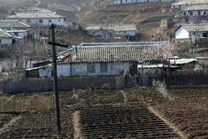 Sản lượng lương thực của Triều Tiên thấp nhất trong một thập kỷ qua