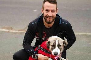 Chú chó vượt gần 5.000km, qua 2 vùng chiến sự để đoàn tụ với chủ