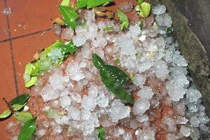 Hà Giang: Sau 10 phút mưa đá thiệt hại hơn 2 tỷ đồng