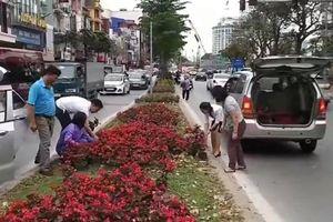 Người dân 'hôi' hoa trên đường phố Hà Nội sau Thượng đỉnh Mỹ - Triều