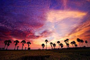 Đến An Giang, ngút mắt trước cánh đồng thốt nốt chạy dài tận chân trời