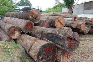 Vụ bắt ông trùm gỗ lậu Phượng 'râu': Chưa phát hiện lực lượng công an liên quan