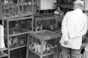 Ảnh lạ về chợ động vật hoang dã ở Sài Gòn năm 1967