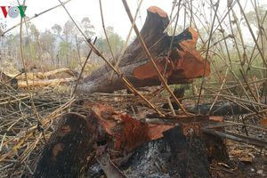 UBND tỉnh Gia Lai chỉ đạo khẩn vụ phá rừng vành đai biên giới
