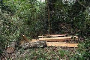 Gia Lai: Kiểm tra, xác minh thông tin vụ phá rừng trái pháp luật