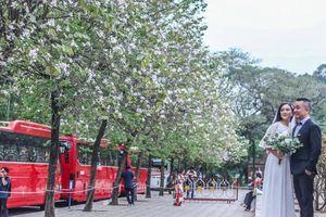 Nhung nhớ mùa hoa tháng 3 về phố