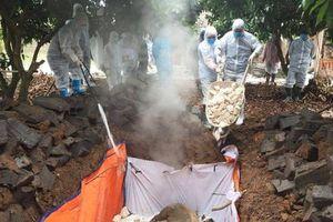 Phát hiện thêm ổ dịch tả lợn Châu Phi ở Quảng Ninh