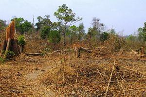 Gia Lai: Xác định có 0,8 ha rừng bị phá hoại ở xã biên giới Ia O